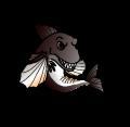 CJR Fishing - Team Rapala Humminbird